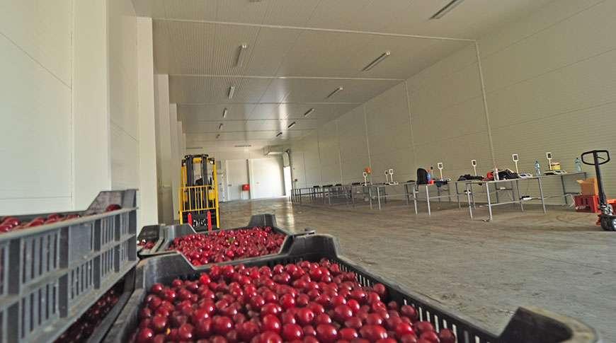 vegetable storage building industrial metal hall